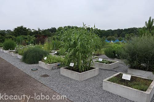 千葉大の薬草園